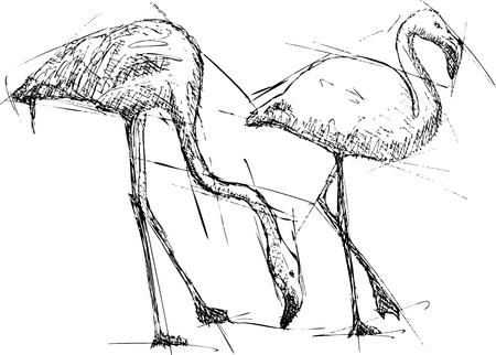 flamingos: Hand pen drawn sketch vector illustration of flamingos