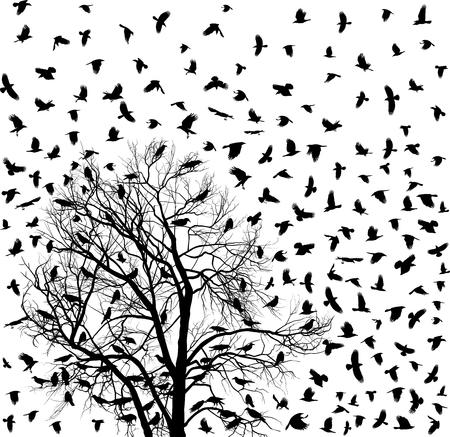 crow: vetor illustration flock of crows over tree Illustration