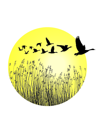 flown: A circular piece of landscape with reeds and-flying mallard ducks Illustration