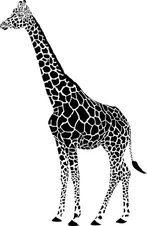 zoos: giraffe - black vector graphics isolated on white background Illustration