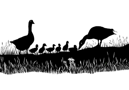 geese: art vector families of Geese in the meadow