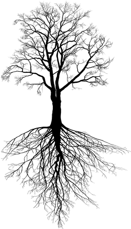 Illustration of a Walnut tree without leaves with roots Vector