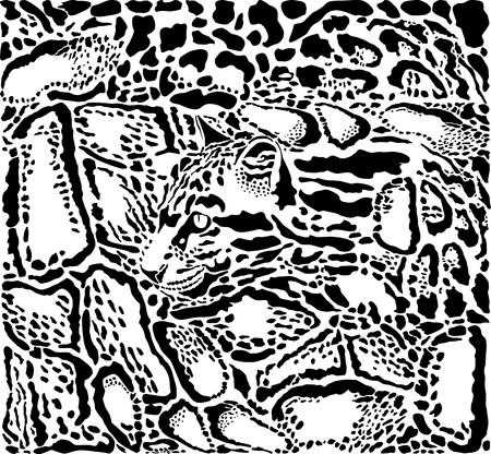 vector illustration background Clouded leopard skin and heads Illustration