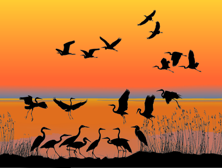 sunset lake: Illustration of a flock of herons on the lake shore at sunset