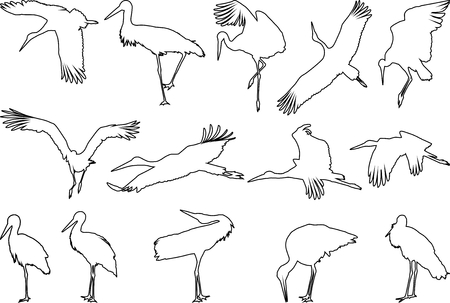 ornithology: vector art fourteen contour storks in different positions