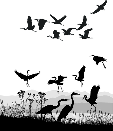 vector illustration Herons on the shores of Lake Vector