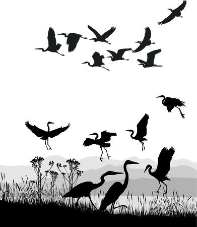 birds in flight: vector illustration Herons on the shores of Lake Illustration
