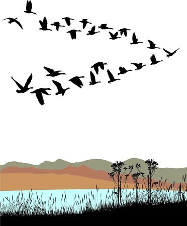 bandada pajaros: Lago Ilustración vectorial costa y gansos salvajes migración a través del paisaje de otoño
