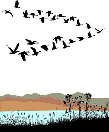 Vector illustration shore lake and wild geese migration through the autumn landscape