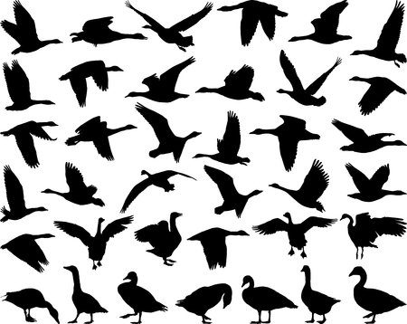 Thirtysix black isolated vector silhouettes of wild geese on the white background Vettoriali