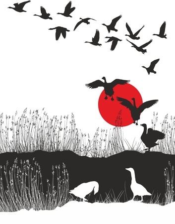 migrating birds: Vector illustration shore lake and wild geese at sunset
