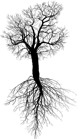 drawings image: vector illustration of a leafless mulberry tree with roots