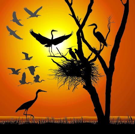 aquatic bird: vector illustration herons nest in the dry tree Illustration