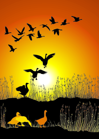 sunset lake: Vector illustration shore lake and migrating wild geese at sunset
