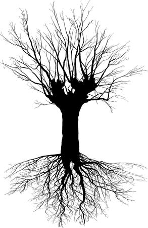 deciduous tree: Ilustraci�n vectorial de un �rbol de hoja caduca con las ra�ces