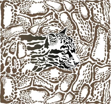 clouded leopard: vector illustration background Clouded leopard skin and heads Illustration