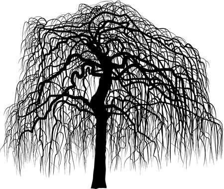 Art leafless mulberry tree Illustration