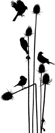 vector art: vector art small birds on a thistle Illustration