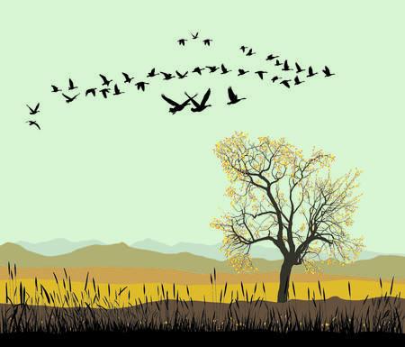 flock: Vector illustration of migration pattern flock of wild geese