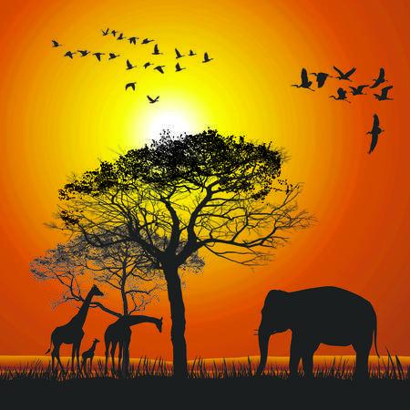 sundown: vector illustration sunset over wildlife safari Illustration