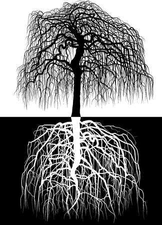tree: Vector illustration of wisteria tree along with roots