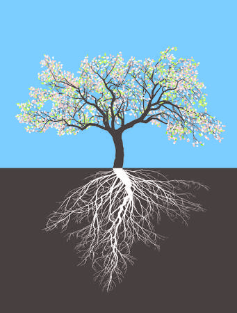 tree fruit: Illustration of a Apple tree in spring with roots Illustration
