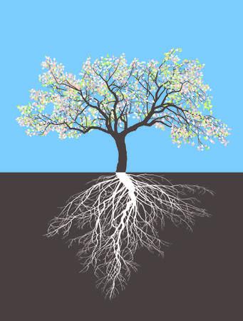 albero da frutto: Illustrazione di un albero di mele in primavera con le radici Vettoriali