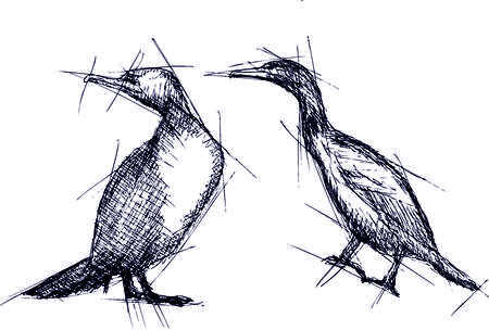 Hand pen drawn vector illustration of cormoran