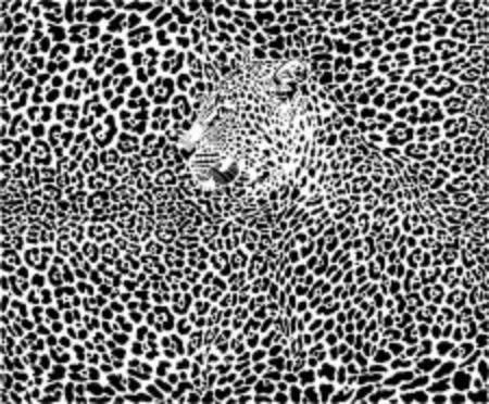 Illustration pattern background leopard skins and heads Illusztráció