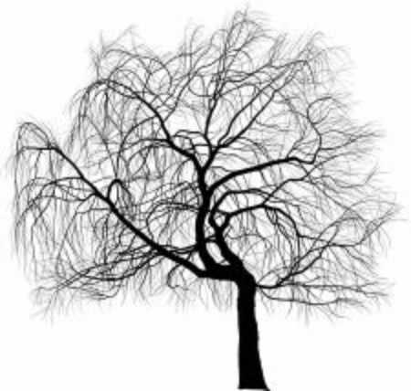 Vector illustration - Weeping Willow ornamental tree aka Salix babylonica or Babylon willow