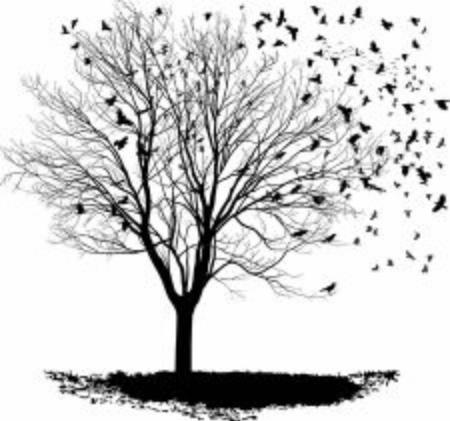Vektor-Illustration einer Rabenherde, Baum ohne Ahorn