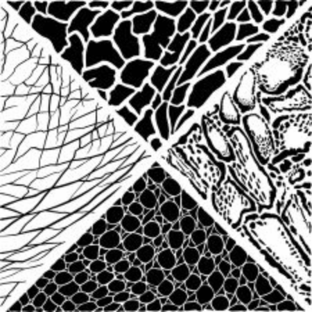 Black and white vector illustration with Clouded Leopard, Giraffe, Crocodile and Elephant
