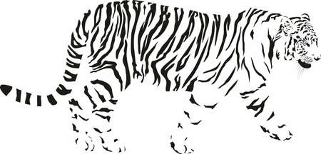 black and white vector drawing of a tiger Vektorové ilustrace