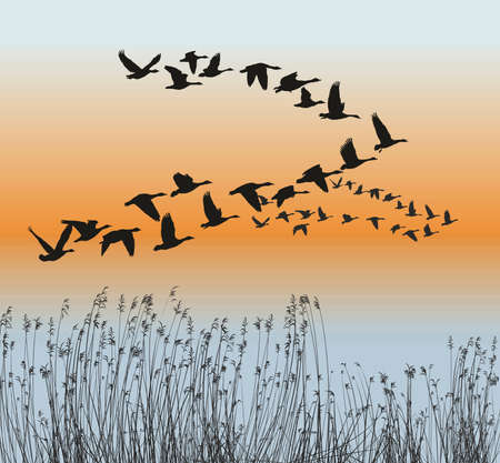 vector illustration of Goose migration in spring