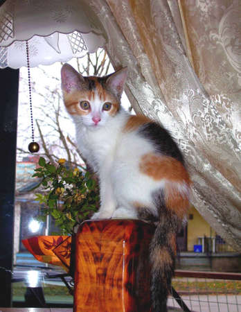 molly: my  cat Molly standing on top of an old box in my living room. Stock Photo