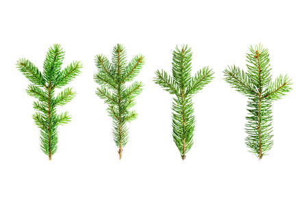Isolated Christmas tree branches 版權商用圖片