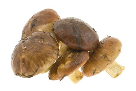 Heap of mushrooms isolated on a white background photo