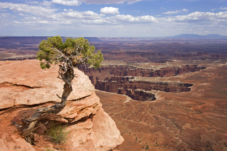 canyonland: Lonely tree in Canyonland National Park, Utah