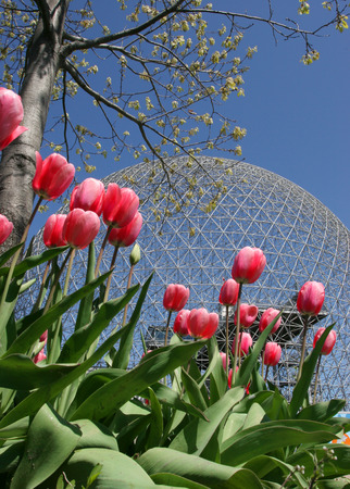 biosphere: Biosphere of Montreal with pink tulips on the foreground