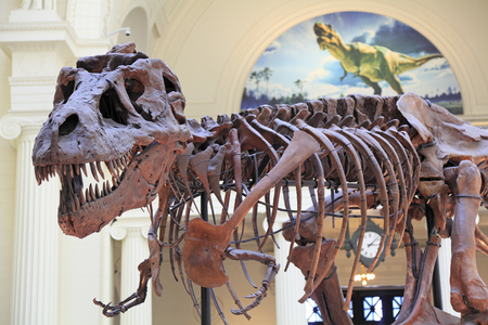 sue: Sue, the most complete skeleton of a T-Rex is on display at the Field Museum in Chicago