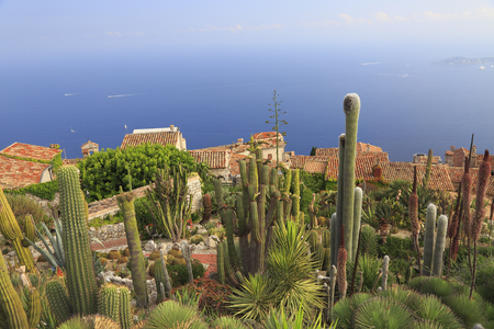Botanical Garden of Eze, with various cacti on foreground, aerial view, French Riviera, Europe Stock Photo