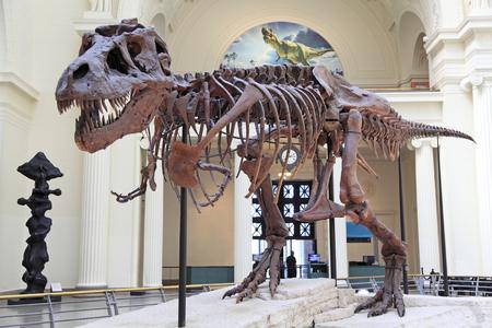 Tyrannosaurus (T-Rex) skeleton Stock Photo - 120914973