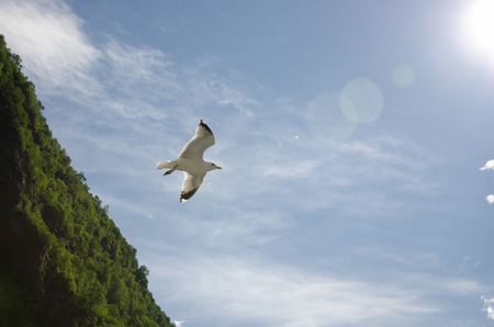 Fjords of Norway. A gull flying in the sky