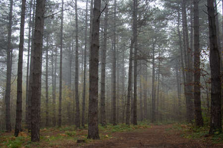 Gloomy landscape. Forest in the fog.