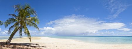 A loneliness palm tree on white sand beach front of a blue lagoon of a paradise island photo