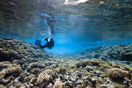 A scubadiver swim in lagoon with coral floor and translucide water
