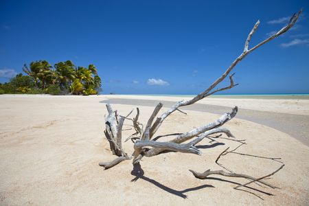 Deadwood on white sand beach front of palm tree of paradise island