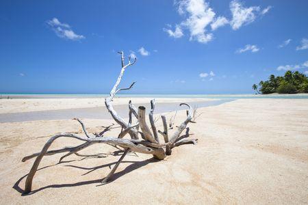Bois mort sur le front de plage de sable blanc de palmier de paradis �le Banque d'images