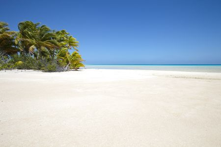 bahamas: White sand beach front of palm tree and blue lagoon of a paradise island