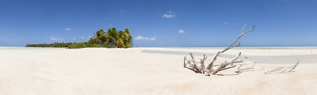 martinique: Paradise white sand beach and palm tree of a tropical island panoramic view